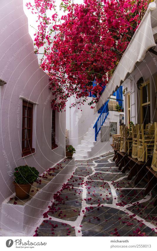 Mykonos Street Ferien & Urlaub & Reisen Tourismus Ausflug Sightseeing Sommer Sommerurlaub Baum Blume Blatt Blüte Dorf Fischerdorf Stadtzentrum Altstadt Haus