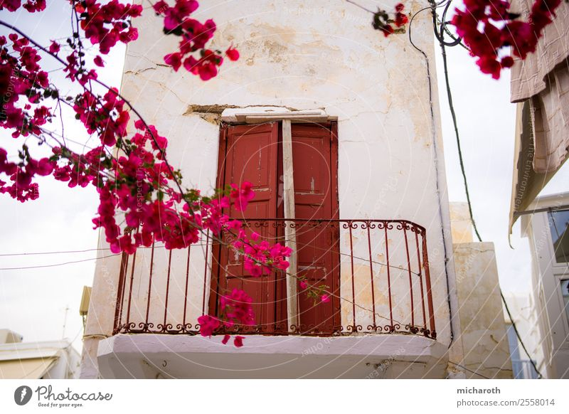 Tür hinter Blumen Ferien & Urlaub & Reisen alt Sommer Pflanze weiß rot Baum Architektur Wand Blüte Gebäude Tourismus Mauer Fassade Ausflug