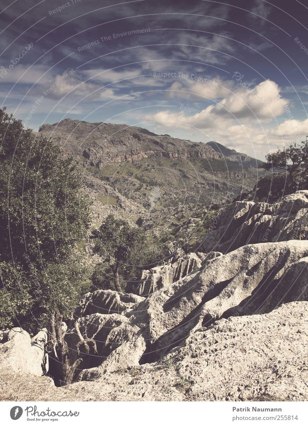 Gebirgspanorama Himmel Baum Ferien & Urlaub & Reisen Wolken Ferne Wald Landschaft Freiheit Berge u. Gebirge Ausflug Abenteuer ästhetisch Gipfel Fernweh