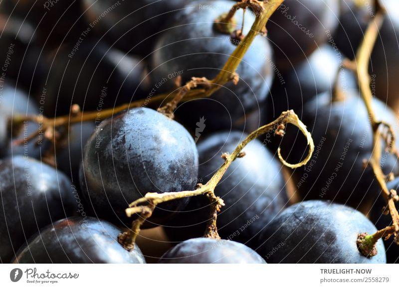 Blaue Weintrauben Frucht Ernährung Bioprodukte Vegetarische Ernährung Diät Gesundheit Gesunde Ernährung Fitness Leben harmonisch Wohlgefühl Zufriedenheit
