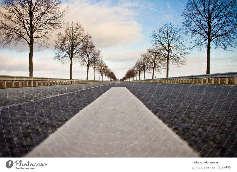 Point of view Himmel Baum Wolken Ferne Straße Landschaft PKW Horizont Verkehr Verkehrswege Fahrzeug Autofahren Straßenverkehr