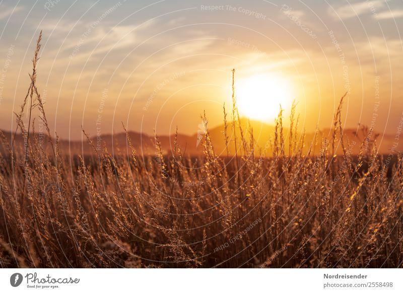 Staubiger Sommer Natur Pflanze Landschaft ruhig Berge u. Gebirge Wärme Leben Herbst Wiese Gras Feld gold glänzend Schönes Wetter Freundlichkeit