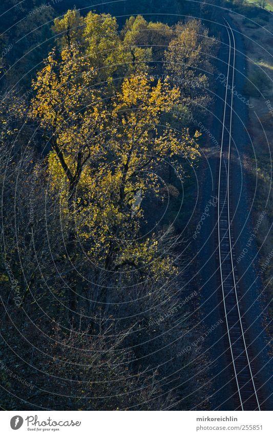 Wild West Landschaft Tier Schönes Wetter Verkehr Schienenverkehr Bahnfahren Eisenbahn Gleise Stimmung beweglich Abenteuer Erfolg erleben Mobilität Zufriedenheit