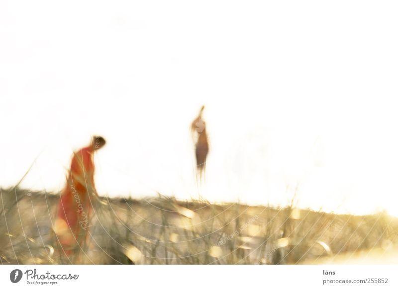 gemeinsam >> einsam > Mensch weiß rot Pflanze Strand Einsamkeit gelb Umwelt Landschaft Gefühle Gras Küste Traurigkeit träumen Paar braun