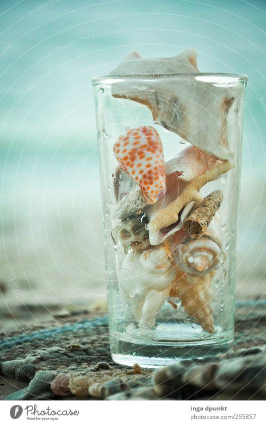 Muschelsucher Wohlgefühl Zufriedenheit Freizeit & Hobby Ferien & Urlaub & Reisen Tourismus Strand Meer Sinai-Halbinsel Naher und Mittlerer Osten Aquarium