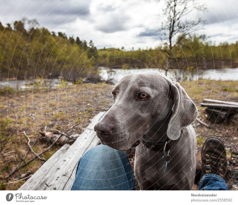 Beste Freundin Ausflug Freiheit wandern Mensch Mann Erwachsene Natur Seeufer Flussufer Wanderschuhe Tier Haustier Hund Kommunizieren Freundlichkeit Neugier