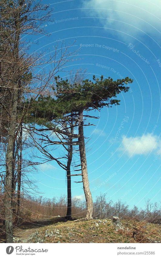 Baum Wiese Wolken Horizont Himmel Baumstamm Natur