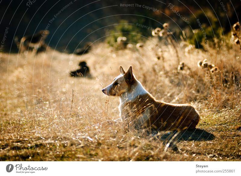 Hund Natur schön Pflanze Landschaft Gras Denken Wetter Feld Tierpaar sitzen hoch authentisch Fröhlichkeit Tiergruppe Sträucher