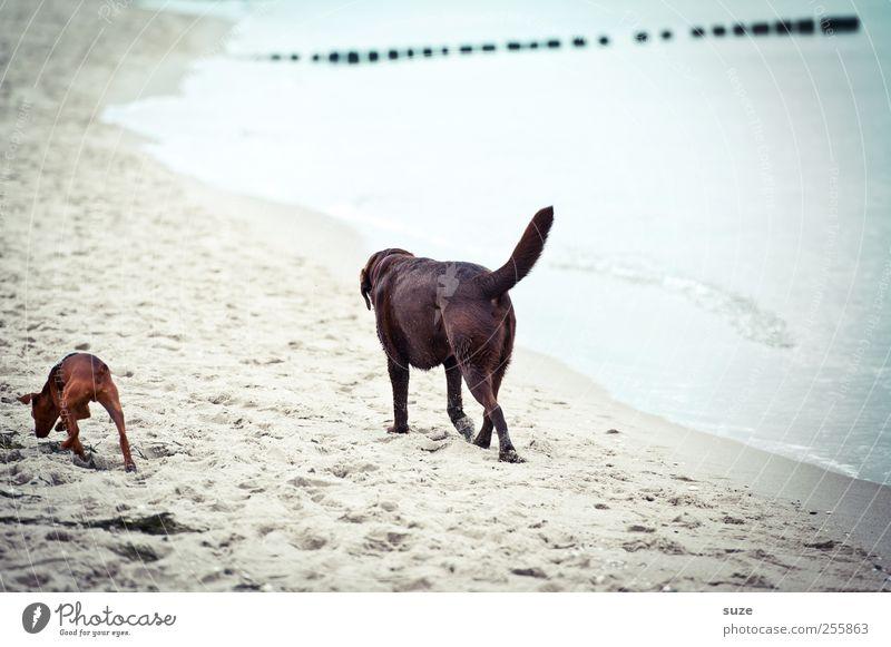 Durch dick und dünn Hund Natur Ferien & Urlaub & Reisen Wasser Sommer Meer Strand Einsamkeit Tier Umwelt Küste Sand Freundschaft Wetter Klima Zufriedenheit