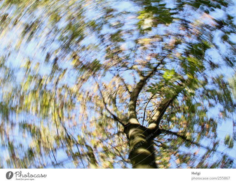 Drehwurm... Umwelt Natur Pflanze Wolkenloser Himmel Herbst Schönes Wetter Baum Blatt Bewegung drehen Wachstum außergewöhnlich fantastisch schön einzigartig