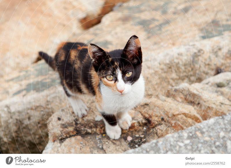 Streunende Katze schwarz und braun schön Gesicht Natur Tier Straße Pelzmantel Haustier Traurigkeit dreckig dünn klein niedlich wild grau weiß Einsamkeit