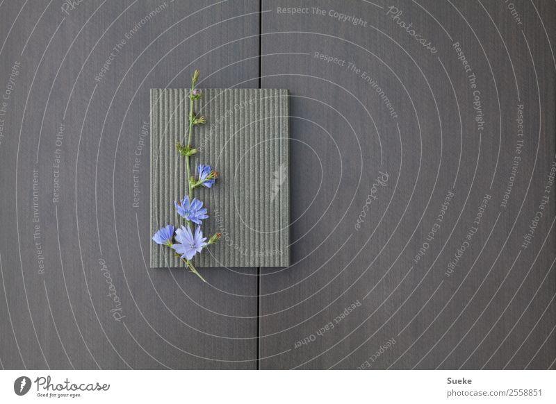 Harmonisches Blumenarrangement schön Kosmetik Wellness Wohlgefühl Zufriedenheit Erholung ruhig Meditation Duft Dekoration & Verzierung Pflanze Frühling Blüte