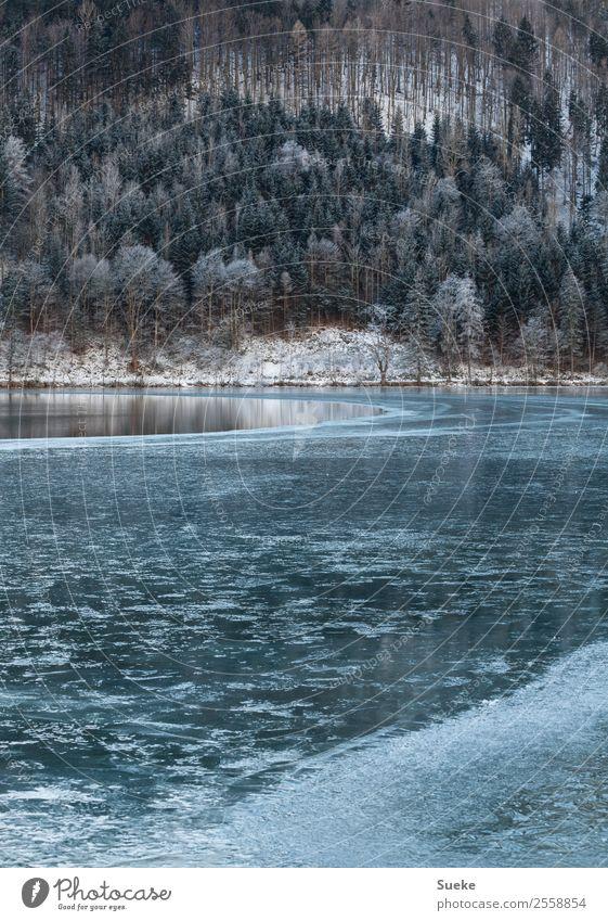 Halbgefrorener See in idyllischer Winterlandschaft Natur Baum Nadelbaum Gebirgssee Seeufer Menschenleer Idylle Frost Eis Landschaft Schnee Wald
