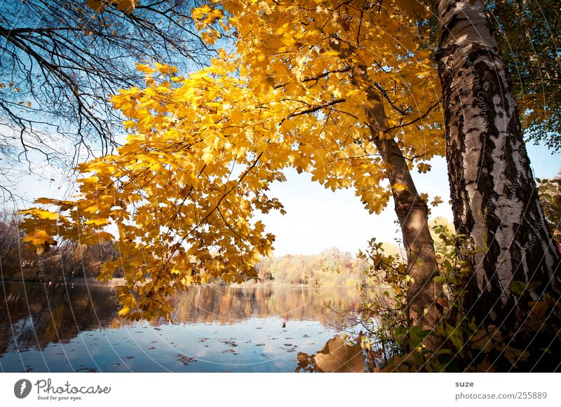 Lieblingsplatz Natur Wasser schön Baum Blatt gelb Herbst Umwelt Landschaft See natürlich Klima außergewöhnlich Urelemente Idylle Seeufer