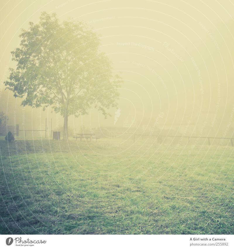barely there Umwelt Natur Landschaft Pflanze Herbst schlechtes Wetter Nebel Baum Gras Wiese elegant natürlich trist Stimmung Romantik Traurigkeit Trauer