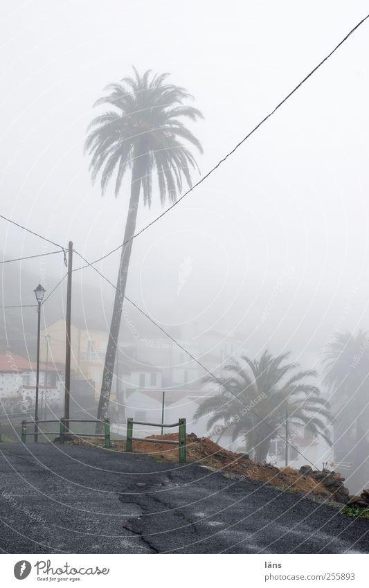 *urlaubstraum* Landschaft Nebel Dorf Haus grau Wege & Pfade Asphalt Straße Palme Strommast Hochspannungsleitung Menschenleer Textfreiraum rechts Tag Silhouette
