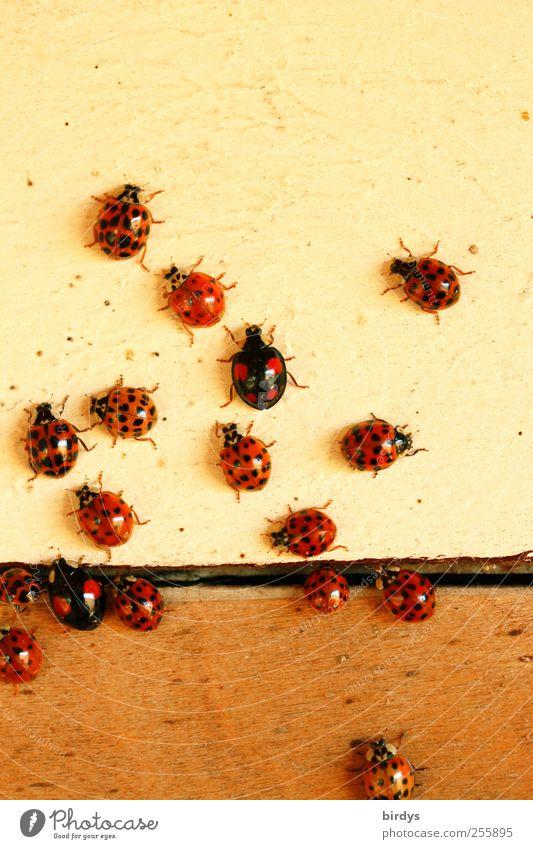 Die neueste Pünktchenkollektion.. Stil Käfer Marienkäfer Tiergruppe krabbeln ästhetisch außergewöhnlich schön positiv Glück Kreativität einzigartig
