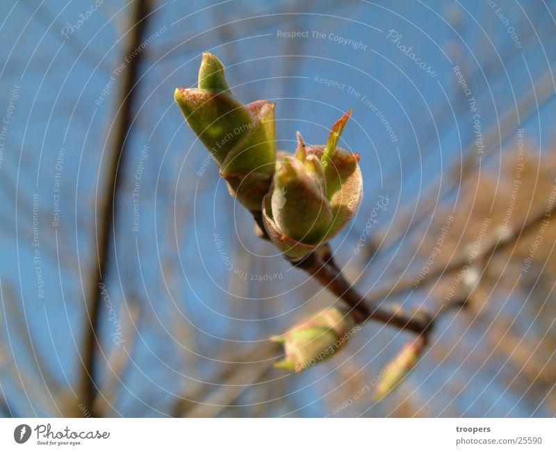 Herbstblüte Baum Pflanze Blüte Stengel