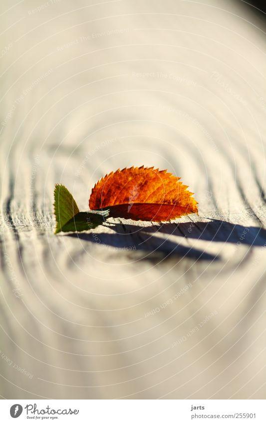 zwei Natur Pflanze Blatt ruhig Herbst Holz Zufriedenheit Gelassenheit Schönes Wetter