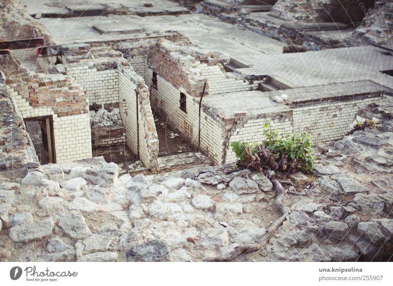 nachmieter gesucht... Natur alt Pflanze Haus Wand Berlin Gebäude Mauer Zeit Stein Häusliches Leben dreckig Vergänglichkeit kaputt planen Bauwerk