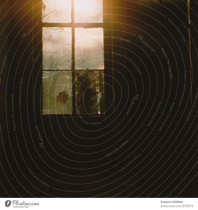off. Haus Fenster nah Einsamkeit Gegenlicht Sonnenlicht alt Unbewohnt dreckig kaputt Hasselblad Mittelformat analog Gedeckte Farben Experiment