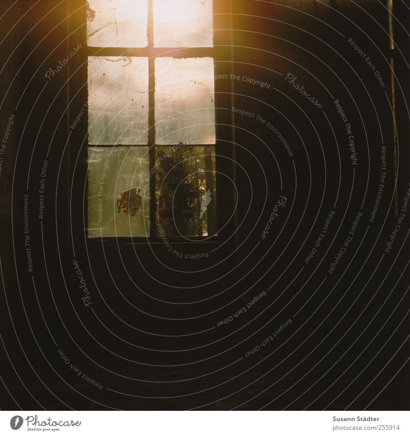 off. alt Einsamkeit Haus Fenster dreckig kaputt nah analog Unbewohnt Mittelformat