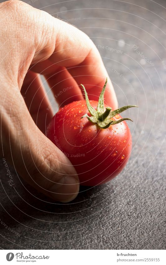 gartenfrische Tomate Lebensmittel Gemüse Bioprodukte Gesundheit Gesunde Ernährung Hand Finger wählen berühren Bewegung rund rot genießen Wassertropfen Ernte