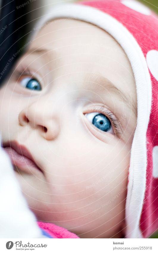 Kleiner Käfer Mensch blau schön Gesicht Auge Leben Kopf klein Baby Mund Nase niedlich Lippen Mütze Wachsamkeit Kind