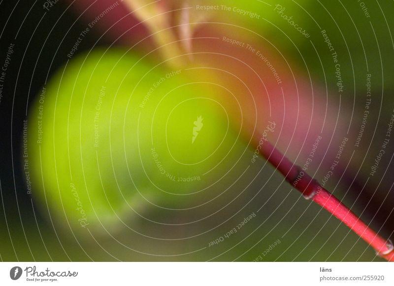 datldletzteersma Natur Pflanze Wandel & Veränderung Blatt Hartriegel menschenleer Färbung Ast Farbfoto
