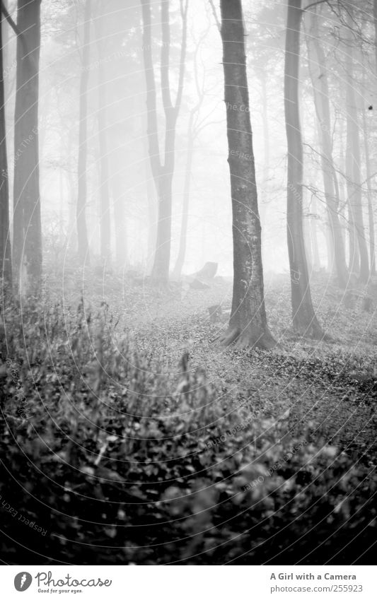 what the hell awaits us? Umwelt Natur Landschaft Pflanze Herbst Winter Nebel Baum Wald bedrohlich dunkel dünn groß Unendlichkeit schön natürlich wild
