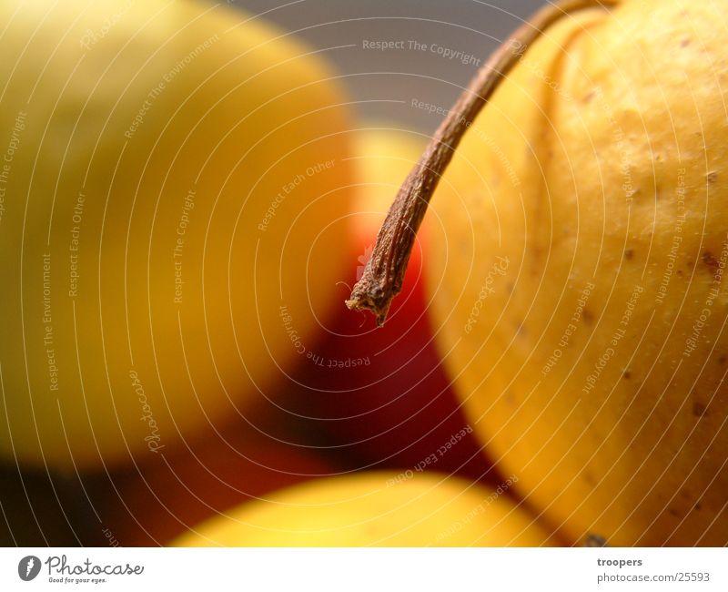 Apfelstiel Ernährung gelb Frucht Stengel