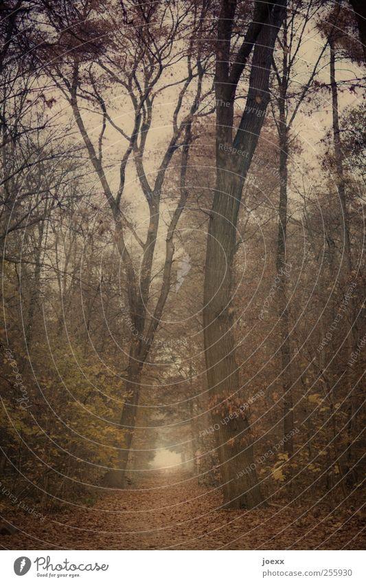 Herbst antik Himmel Natur alt grün Baum Wald gelb Wege & Pfade Religion & Glaube braun Nebel groß Hoffnung Idylle