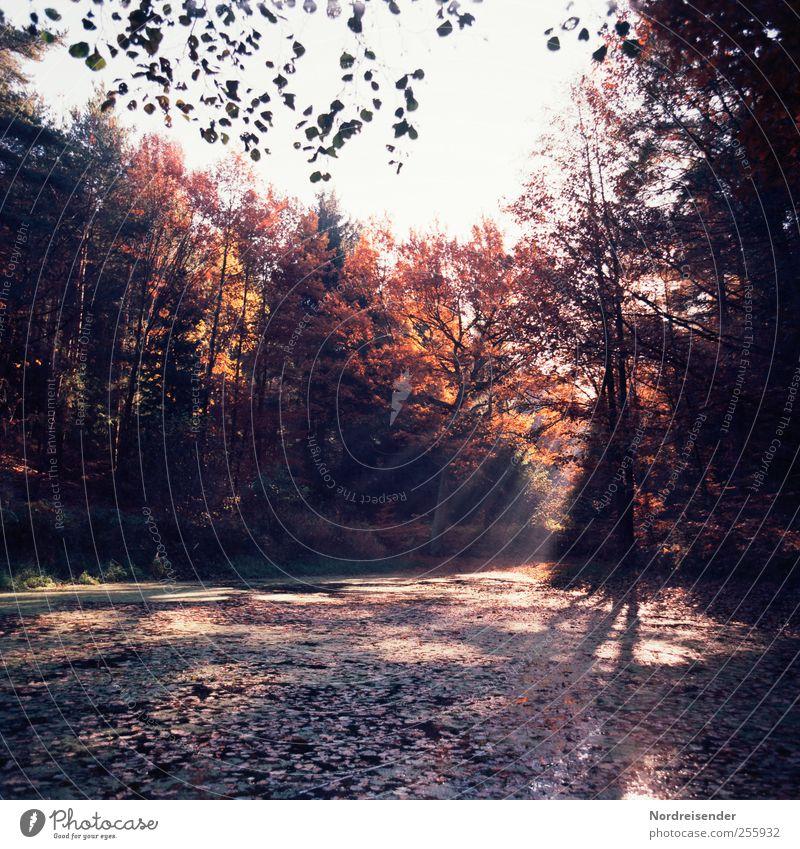 Licht und Schatten Sinnesorgane Erholung ruhig Natur Landschaft Pflanze Herbst Schönes Wetter Wald Moor Sumpf Teich ästhetisch mehrfarbig Einsamkeit Duft