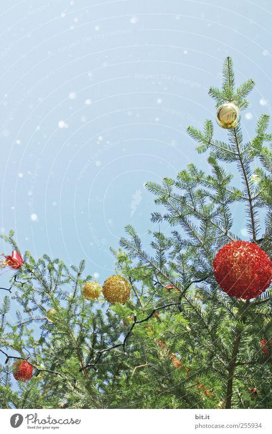 Weihnachtsbaum Feste & Feiern Umwelt Himmel Schnee Schneefall Baum Kitsch Krimskrams Glas glänzend hängen rund blau gold rot Vorfreude Tradition