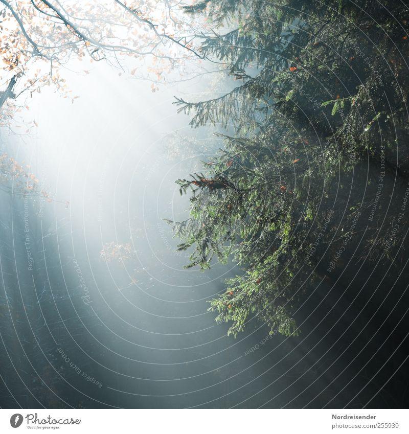 Entlarvte Dunkelmänner Natur ruhig Wald Herbst Leben Religion & Glaube Beleuchtung Nebel ästhetisch Klima Hoffnung Streifen berühren Meditation harmonisch