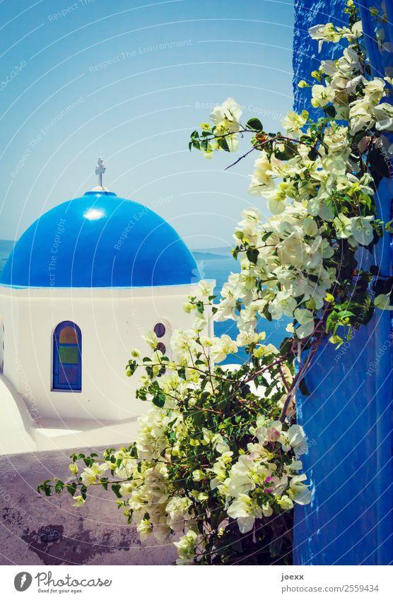 Blau Ferien & Urlaub & Reisen Tourismus Himmel Meer Insel Santorin Griechenland Dorf Altstadt Haus Kirche Mauer Wand Dach Sehenswürdigkeit alt schön blau grün