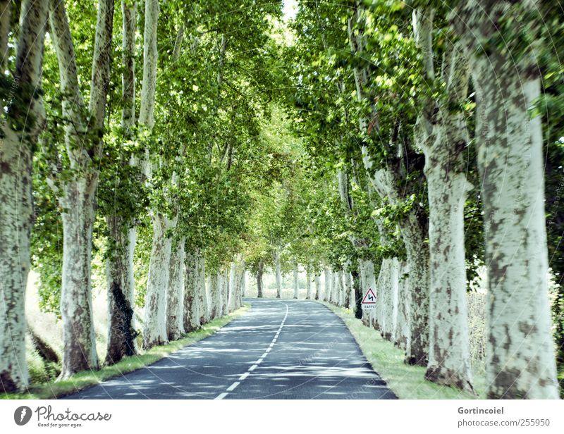 En route Baum Sommer Straße Geschwindigkeit fahren Baumkrone Allee unterwegs Sonnenfleck