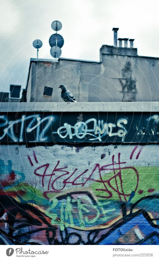 Hinterhofparadies Tier Einsamkeit Haus kalt Wand Graffiti Gebäude Stein Mauer Traurigkeit Vogel warten Dach Schornstein Taube Hinterhof