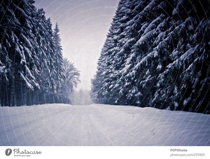 Kalte Zeiten Ausflug Abenteuer Winter Schnee Winterurlaub Wintersport Wetter Schneefall Baum Tanne Wald Menschenleer trist kalt Dunst Nebel Straße Farbfoto