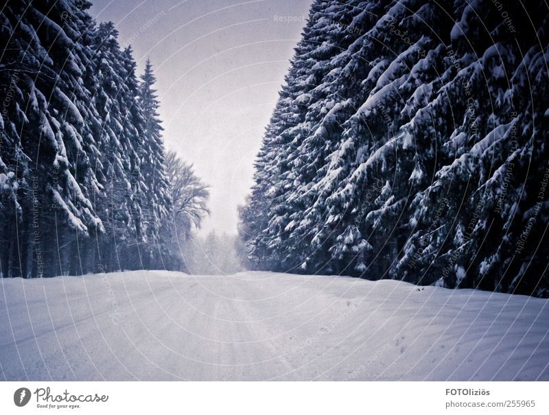 Kalte Zeiten Baum Winter Wald Straße kalt Schnee Schneefall Wetter Nebel Ausflug Abenteuer trist Tanne Dunst Wintersport Winterurlaub