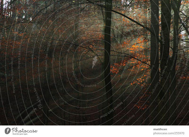 Sonnenstrahlen Umwelt Landschaft Pflanze Sonnenlicht Herbst Nebel Baum Wald Natur ruhig Stimmung herbstlich Farbfoto Außenaufnahme Tag Licht Schatten