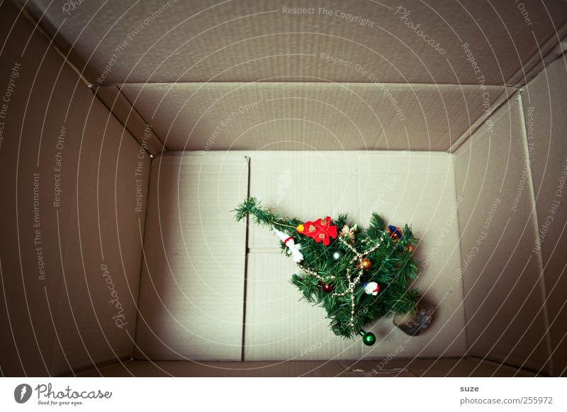 Die Zeit ist reif! grün Weihnachten & Advent Baum klein liegen Dekoration & Verzierung niedlich Kreativität Geschenk Kitsch Kunststoff Umzug (Wohnungswechsel) Weihnachtsbaum Überraschung Karton Vorfreude