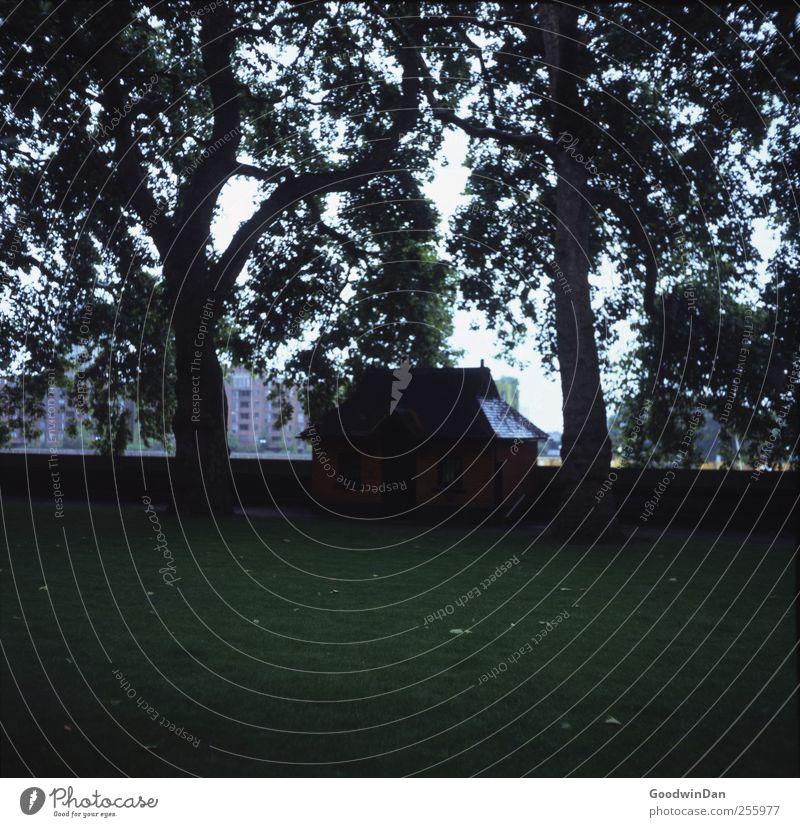 Da wohnst du? Natur alt Baum Stadt Haus kalt Umwelt Gras Park Wetter authentisch einfach Hütte Stadtzentrum Hauptstadt eckig