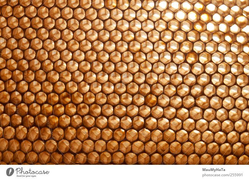 Wachs Natur Pflanze Tier Sonne Sommer Blume Gras Blüte Garten Park Feld Nutztier Wildtier Biene Tiergruppe Tierfamilie chaotisch Design exotisch Handel