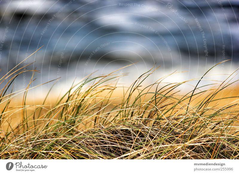 Sylter Dünengras Natur Wasser Meer Freude Strand Landschaft Gras Küste träumen Wellen Insel Nordsee Schönes Wetter