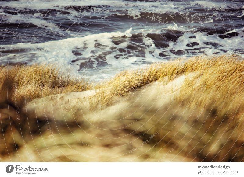Platz in den Dünen Wasser Strand Sand Küste Wellen Zufriedenheit Nordsee Lebensfreude Umweltschutz Sylt Optimismus Frühlingsgefühle Dünengras