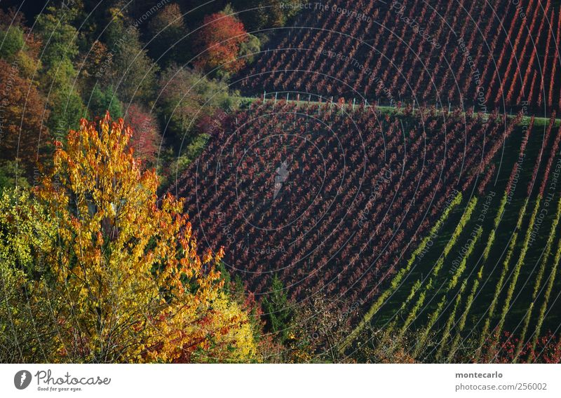 Heilbronner.. Umwelt Natur Landschaft Pflanze Sonne Sonnenlicht Herbst Schönes Wetter Sträucher Blatt Grünpflanze Nutzpflanze Wildpflanze Wald Hügel authentisch