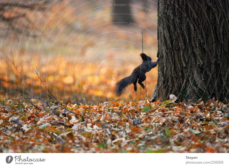 Natur Baum Pflanze Sommer Blatt Tier Wald Ferne Herbst Bewegung Gras springen Park Feld fliegen Wildtier