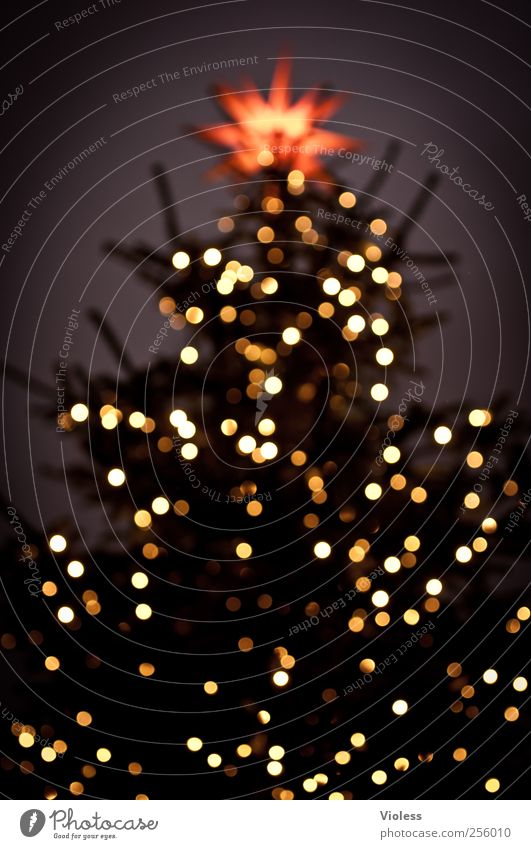 Licht im Dunkel Feste & Feiern Weihnachten & Advent leuchten Vorfreude Geborgenheit besinnlich Weihnachtsbaum Christbaumkugel Stern (Symbol) Tannenbaumspitze
