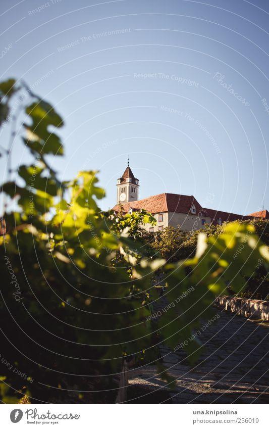 Es stand an seines Schlosses Brüstung... Natur Pflanze Blatt Umwelt Gebäude Stimmung authentisch Tourismus Schönes Wetter Perspektive Wein historisch